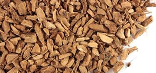 calamus root, acorus calamus