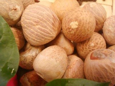 Betel Nuts (Areca catechu)